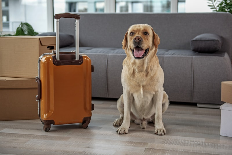 Meilleures destinations en famille avec un chien